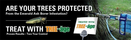 Protect Your Trees from the Emerald Ash Borer