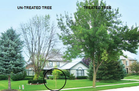 Contact Us to Protect Your Trees